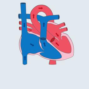 Grafik des gesunden Herzens
